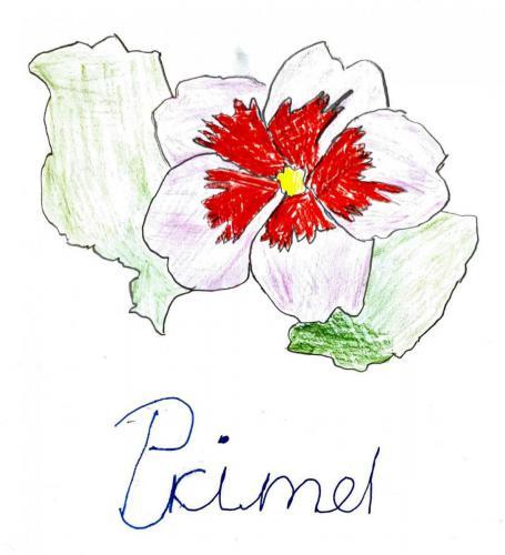 Yannik, 10 Jahre - PRIMEL